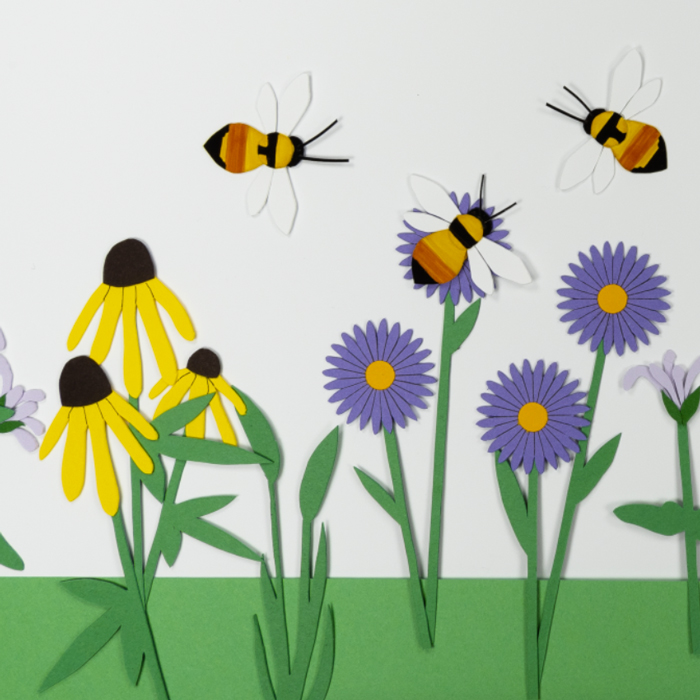 Native Bees, a story of diversity